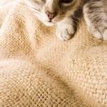 Kitty face — Stock Photo #30705393