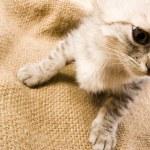 Kitty face — Stock Photo #30705535