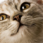 Kitty face — Stock Photo #30705773