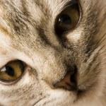 Kitty face — Stock Photo #30705785