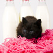 Stock Photo: Black Cat & Milk & Rope