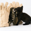 Little cats in the striped mitten — Stock Photo