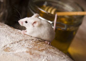 Mouse on bread — Stock Photo