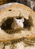 Muis in een brood — Stockfoto