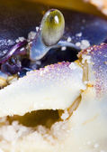 The crab on the sand — Stock Photo