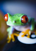 Frog & Billiard ball — Stock Photo
