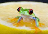 Frog with lemon — Stock Photo