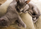 Cats on the bed — Stock Photo