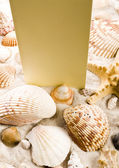 Paper background and seashell — Stock Photo