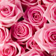 Pink roses — Stock Photo #30762995