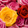 Romantic roses — Stock Photo #30764471