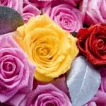 Wet roses — Stock Photo #30765833