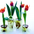 Tulips isolated on white — Stock Photo