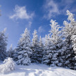 Snowy forest — Stock Photo #30771645