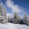 Foto Stock: Snowy forest