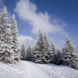 Foto de Stock  : Snowy forest