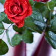 Romantic roses — Stock Photo #30775197