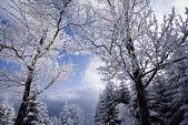 Landscape winter — Stock Photo