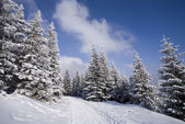 Snowy forest — Stock Photo