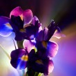 Iris flower — Stock Photo #30780725