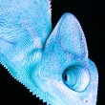 Chameleon — Stock Photo #30782761