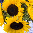 Sunflowers — Stock Photo #30810221