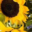 Sunflowers — Stock Photo #30811929