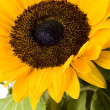 Sunflowers — Stock Photo #30813115