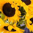 Sunflowers — Stock Photo #30813165