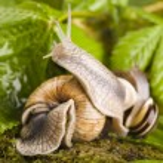 Snail on moss — Stock Photo