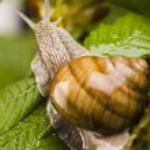Snail on moss — Stock Photo #30814105