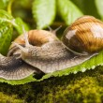 Snail on moss — Stock Photo #30814645