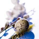 Quail egg — Stock Photo