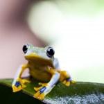 Постер, плакат: Exotic frog