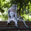 Monkey — Stock Photo #38935833