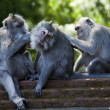 Monkeys — Stock Photo #38936087