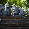 Monkeys — Stock Photo #38936955