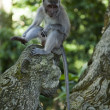Stock Photo: Monkey