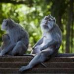 Monkeys on stairs — Stock Photo
