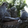 Stock Photo: Monkeys family