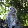 Monkeys family — Stock Photo