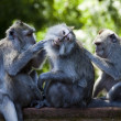 Monkeys — Stock Photo #38944895