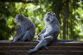 Monkeys on stairs — Stock Photo