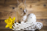 Bunny huddle to egg, narcissus — Stock Photo