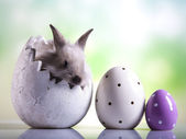 Raw of eggs, bunny — Stock Photo