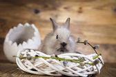 Rabbit in white nest — Stock Photo