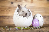 Cute gray bunny, easter eggs — Stok fotoğraf