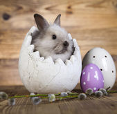 Surprised rabbit, easter egg — Stock Photo