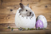 Bunny and natural eggs — Stock Photo