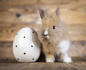 Spring bunny and egg — Stock Photo